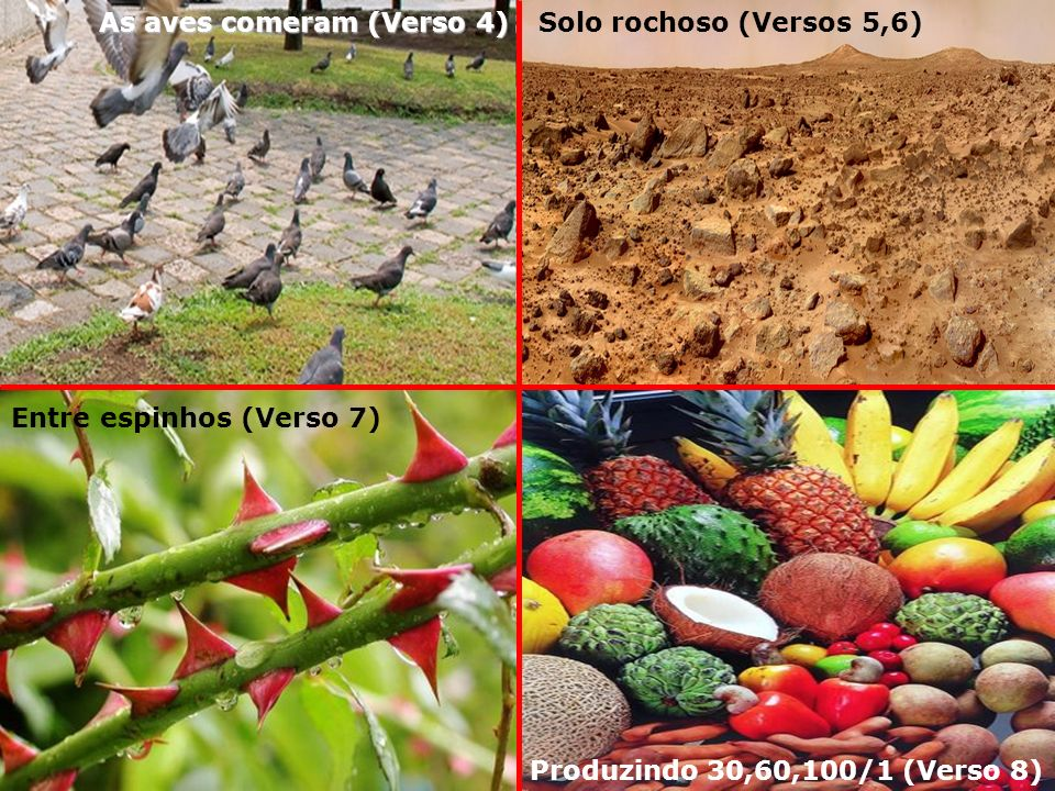 Solo rochoso (Versos 5,6) Entre espinhos (Verso 7) As aves comeram (Verso 4) Produzindo 30,60,100/1 (Verso 8)