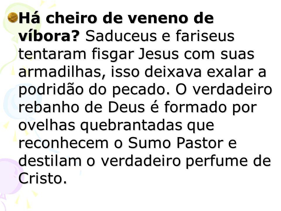 Há cheiro de veneno de víbora? Saduceus e fariseus tentaram fisgar Jesus com suas armadilhas, isso deixava exalar a podridão do pecado. O verdadeiro r