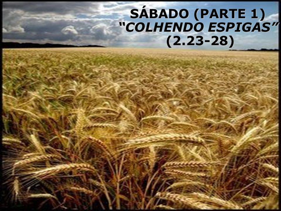 SÁBADO (PARTE 1) COLHENDO ESPIGAS (2.23-28)