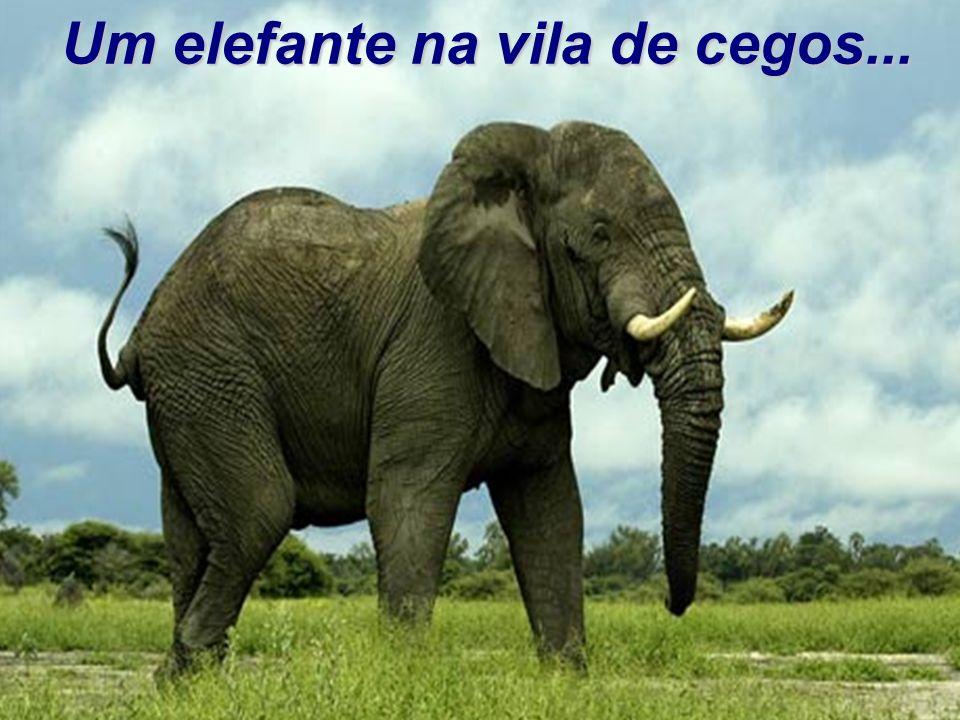 Um elefante na vila de cegos...