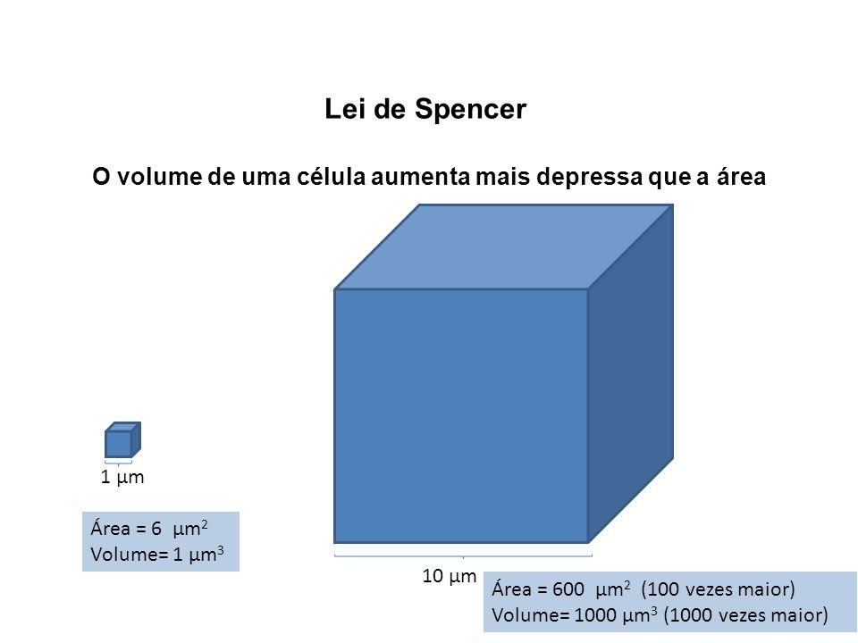 Lei de Spencer O volume de uma célula aumenta mais depressa que a área 1 µm Área = 6 µm 2 Volume= 1 µm 3 10 µm Área = 600 µm 2 (100 vezes maior) Volum