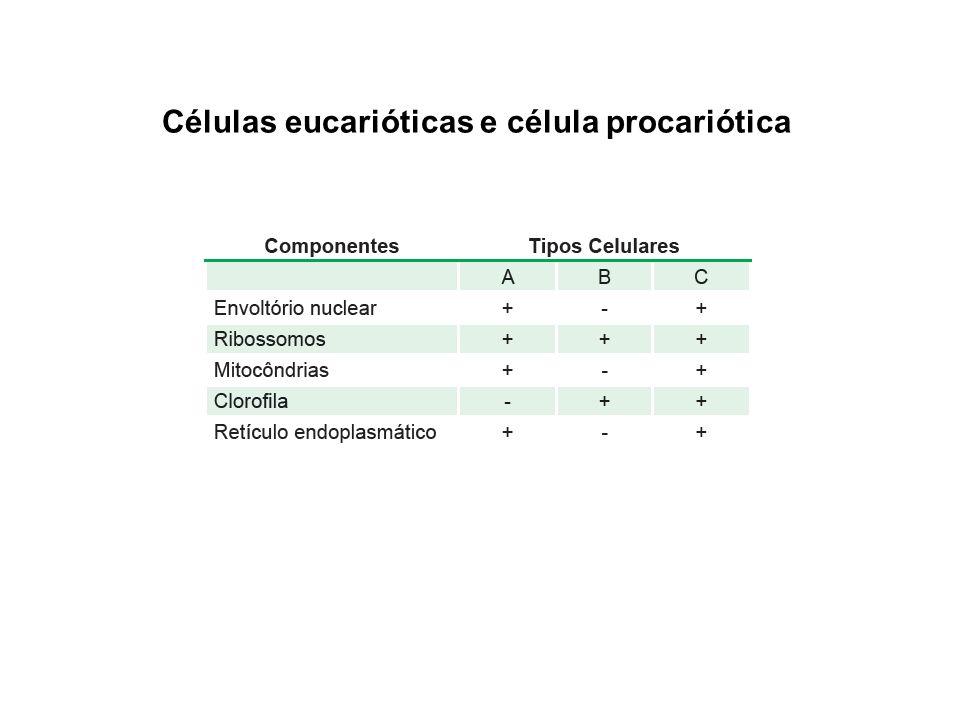 Células eucarióticas e célula procariótica