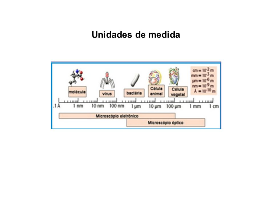 Unidades de medida