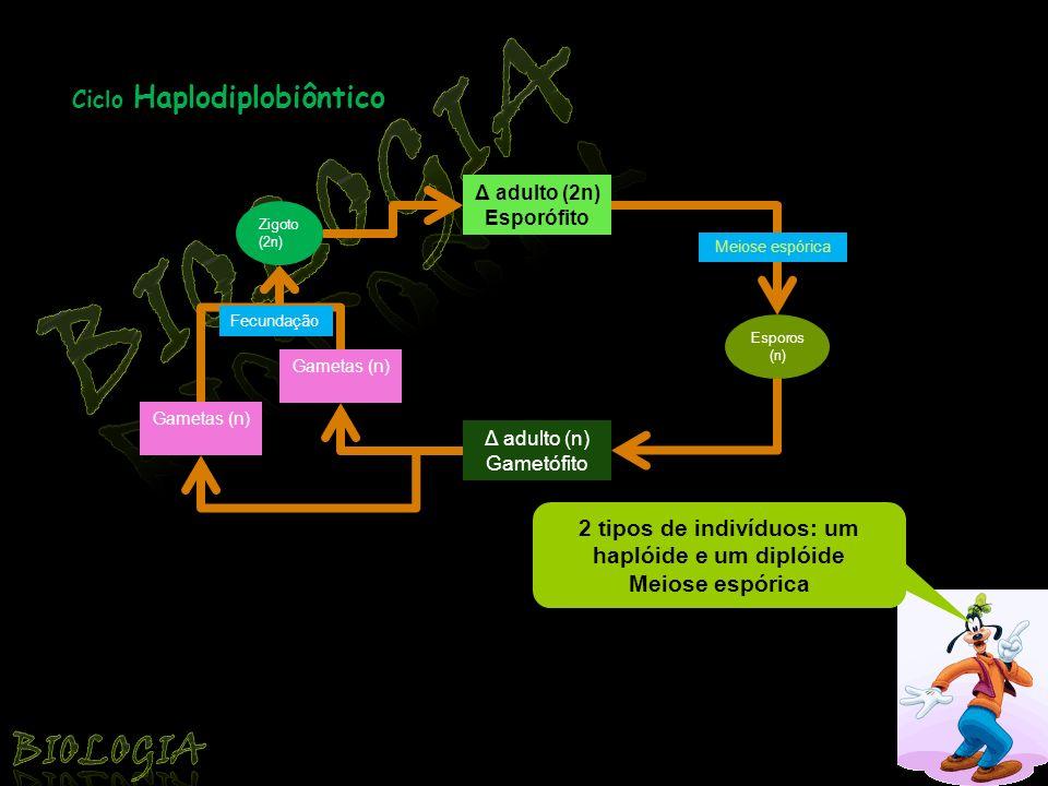 Ciclo Diplôntico Δ adulto (2n) Gameta (n) Meiose gamética Gameta (n) Zigoto (2n) Indivíduo diplóide Meiose gamética Fecundação