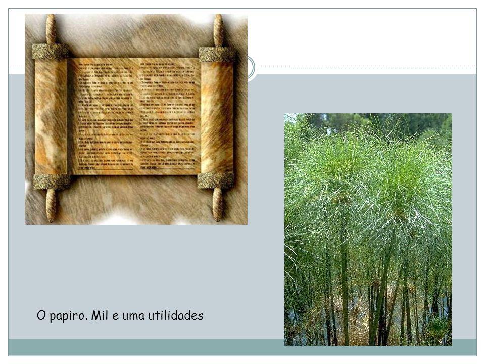 O papiro. Mil e uma utilidades