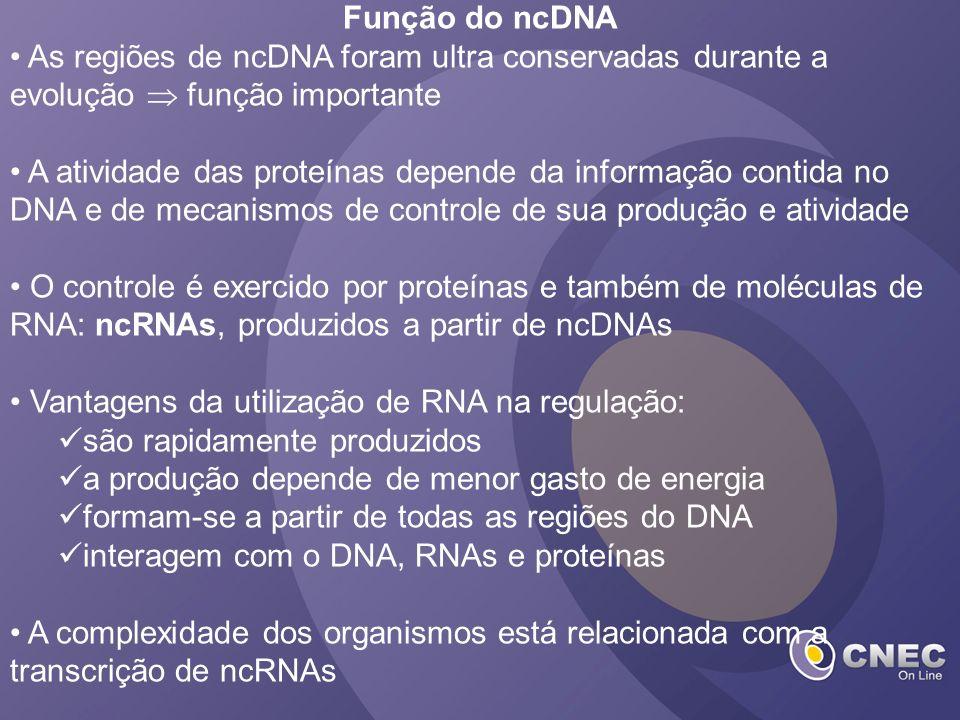 Função do ncDNA As regiões de ncDNA foram ultra conservadas durante a evolução função importante A atividade das proteínas depende da informação conti