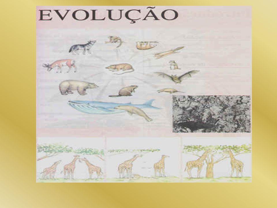 EVIDÊNCIAS DA EVOLUÇÃO 1- Fósseis