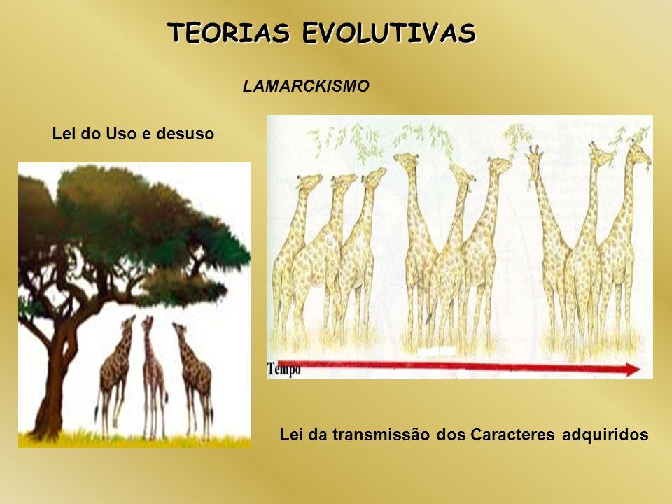 TEORIAS EVOLUTIVAS LAMARCKISMO Lei do Uso e desuso Lei da transmissão dos Caracteres adquiridos