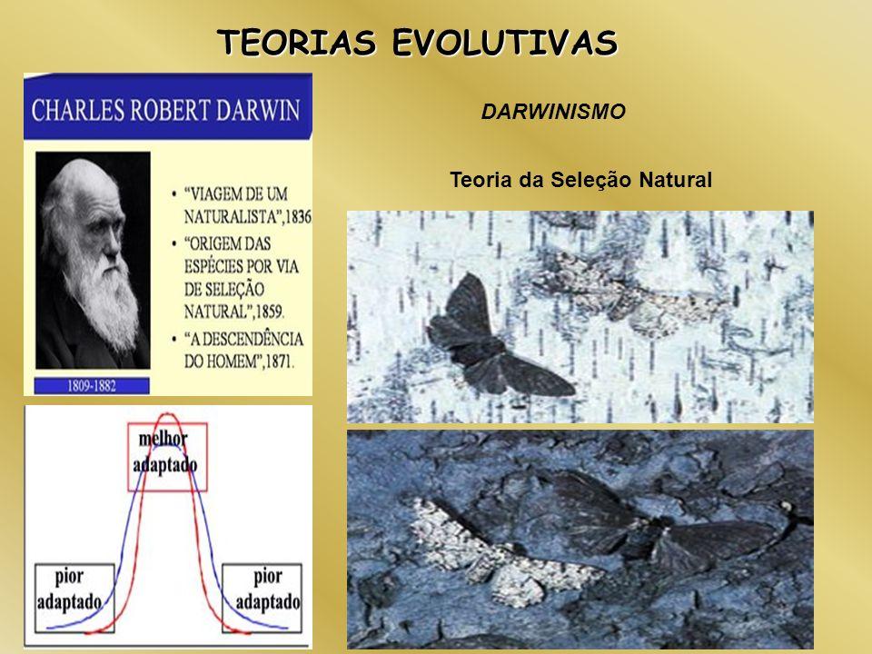 TEORIAS EVOLUTIVAS DARWINISMO Teoria da Seleção Natural