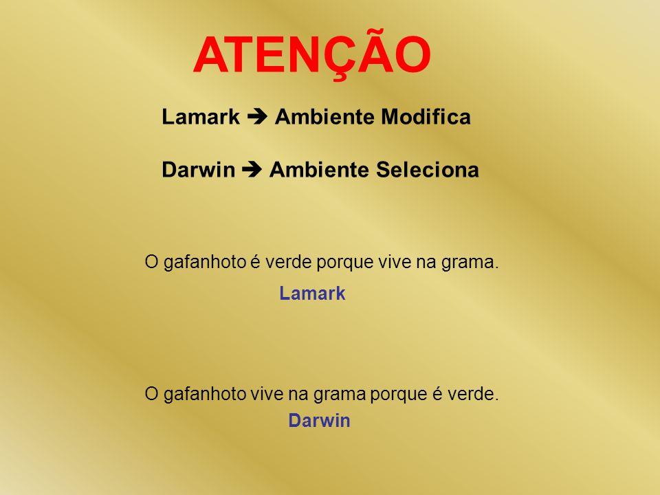 ATENÇÃO Lamark Ambiente Modifica Darwin Ambiente Seleciona O gafanhoto é verde porque vive na grama. O gafanhoto vive na grama porque é verde. Lamark