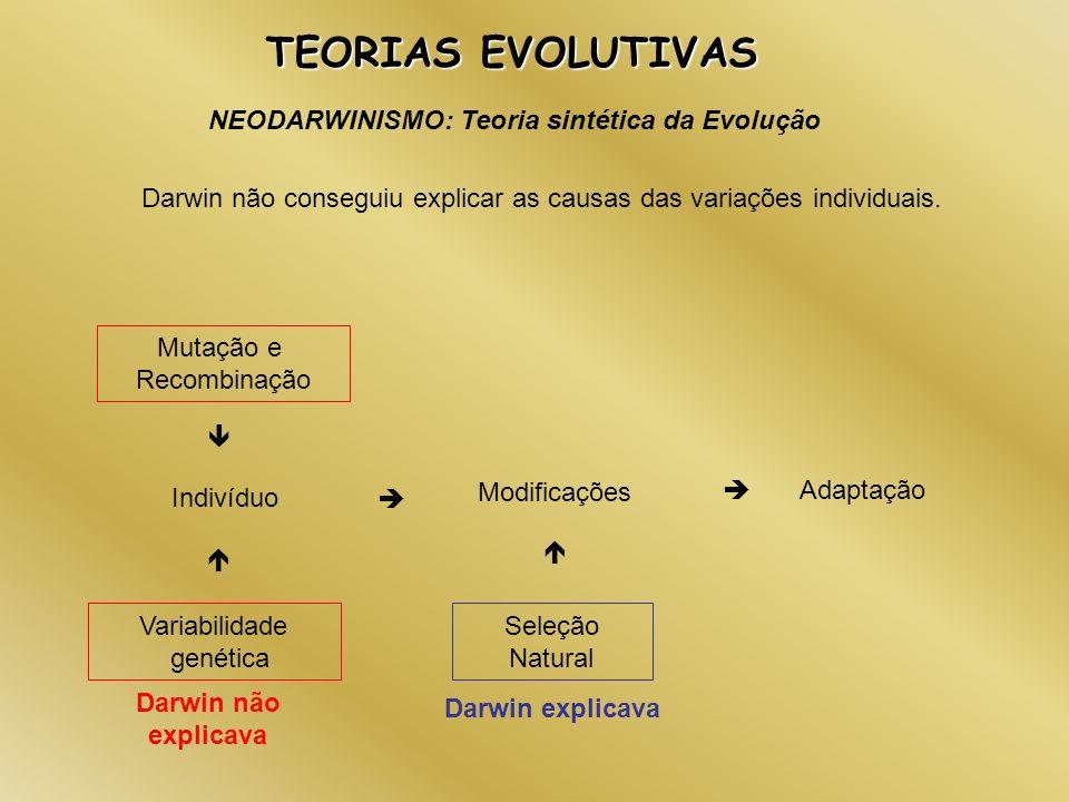 NEODARWINISMO: Teoria sintética da Evolução TEORIAS EVOLUTIVAS Darwin não conseguiu explicar as causas das variações individuais. Indivíduo Mutação e