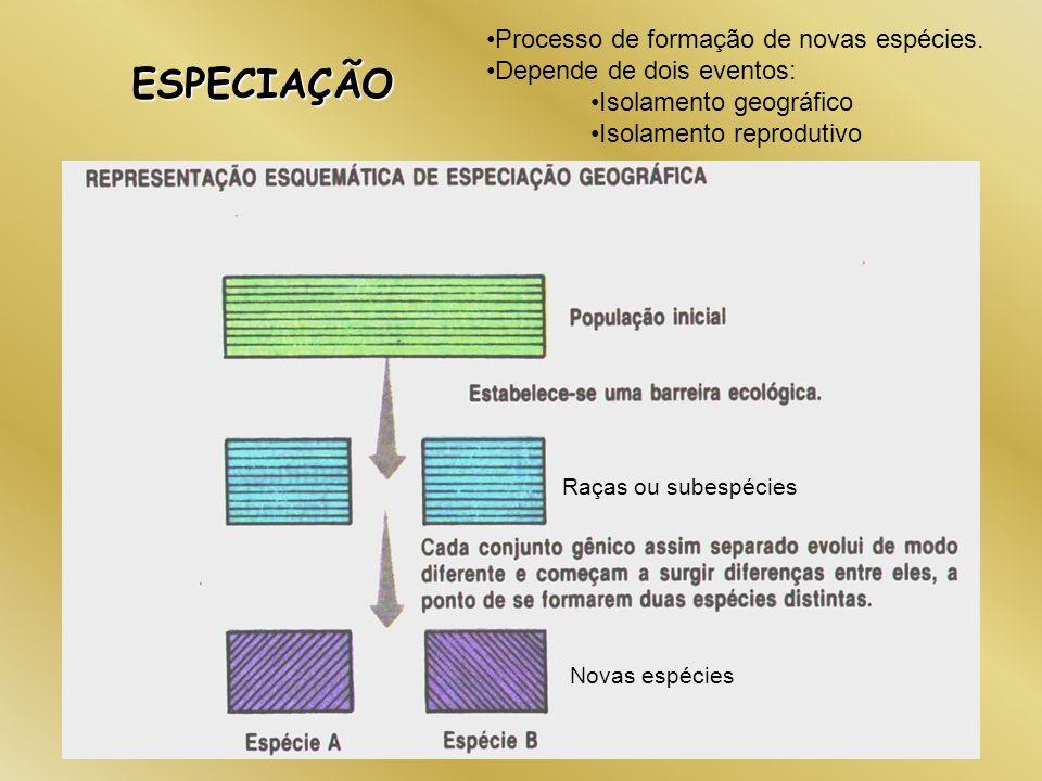 ESPECIAÇÃO Processo de formação de novas espécies. Depende de dois eventos: Isolamento geográfico Isolamento reprodutivo Raças ou subespécies Novas es