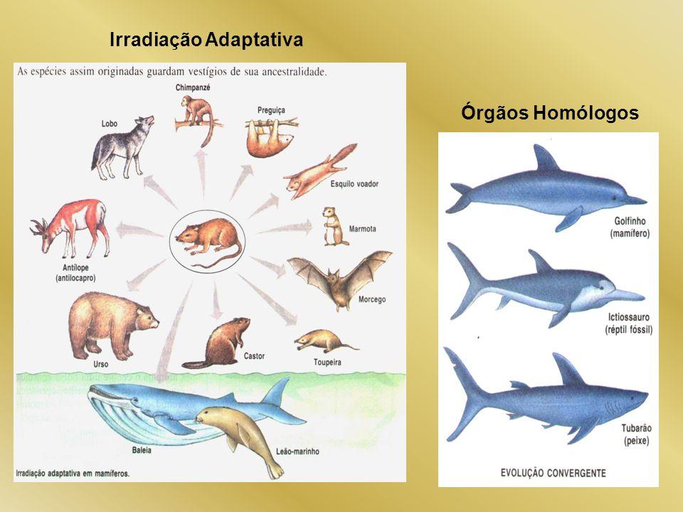 Irradiação Adaptativa Órgãos Homólogos