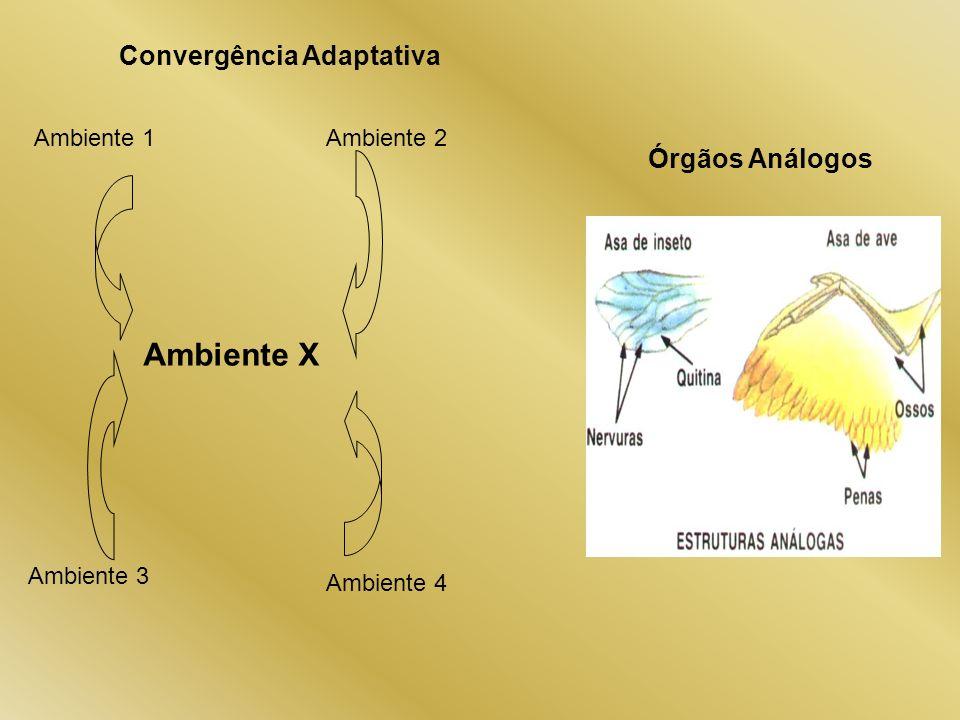 Convergência Adaptativa Órgãos Análogos Ambiente 1Ambiente 2 Ambiente 3 Ambiente 4 Ambiente X