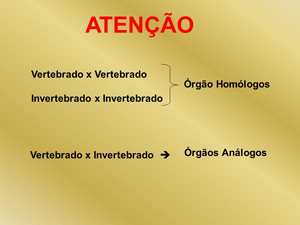 ATENÇÃO Vertebrado x Vertebrado Invertebrado x Invertebrado Vertebrado x Invertebrado Órgão Homólogos Órgãos Análogos