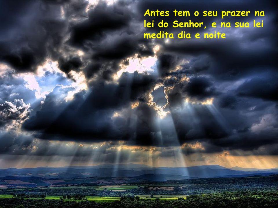 Antes tem o seu prazer na lei do Senhor, e na sua lei medita dia e noite