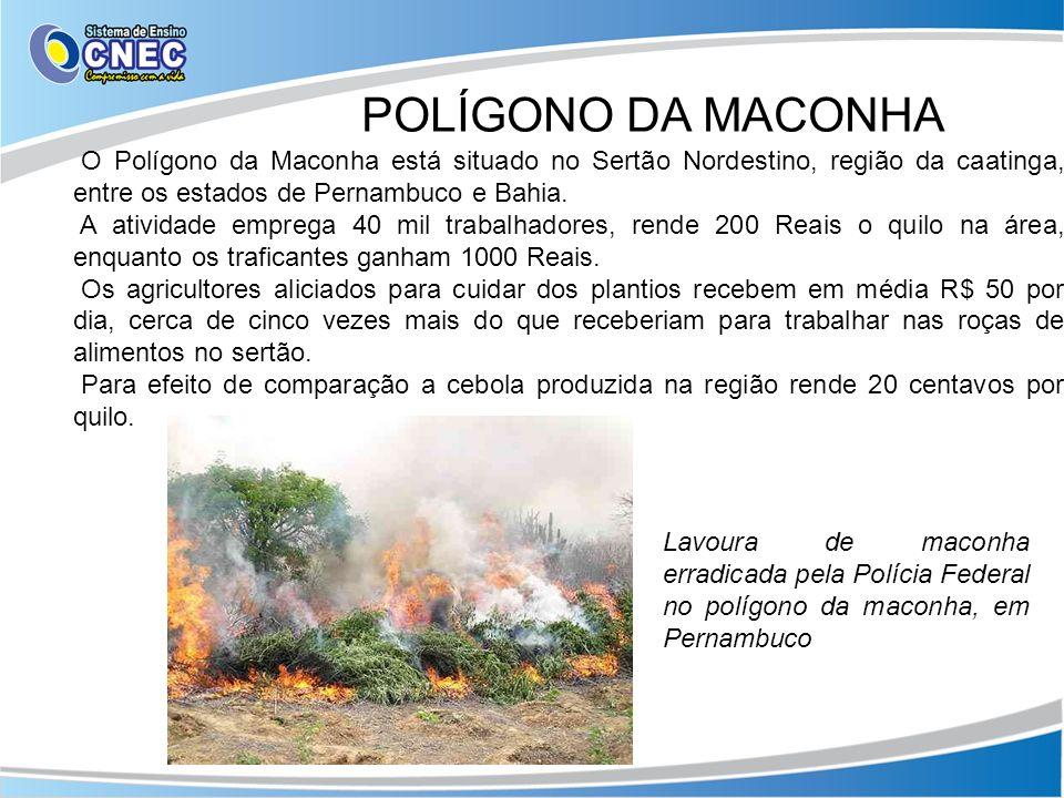 O Polígono da Maconha está situado no Sertão Nordestino, região da caatinga, entre os estados de Pernambuco e Bahia. A atividade emprega 40 mil trabal