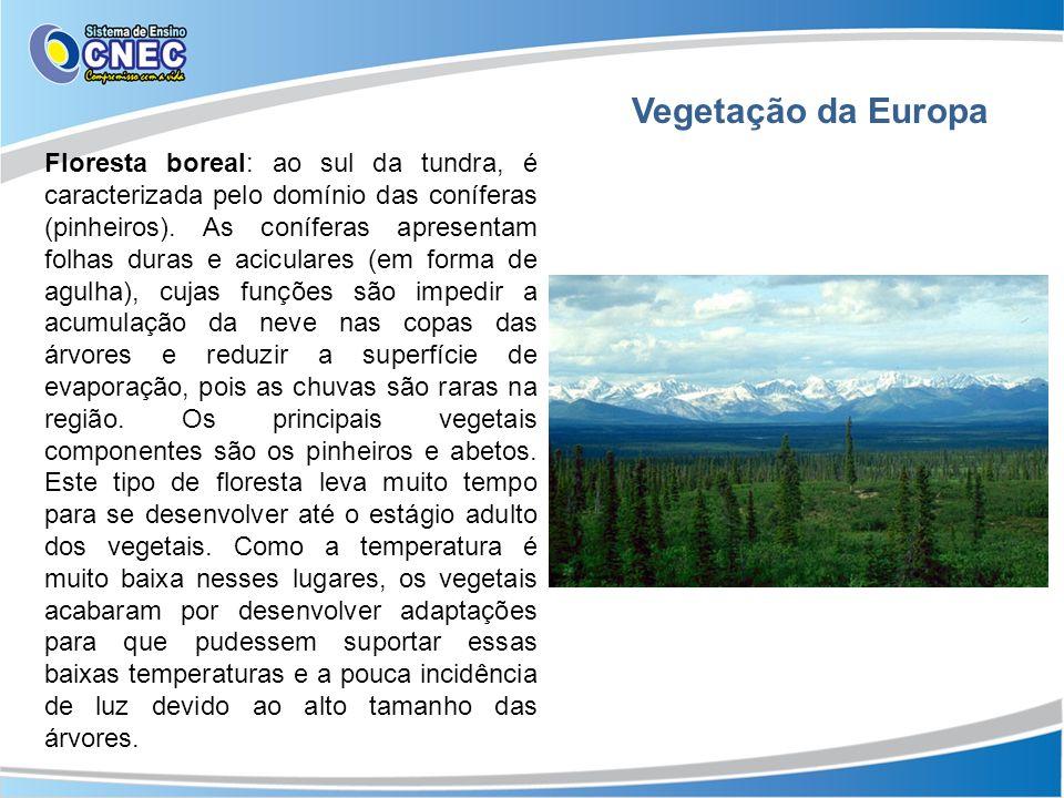 Floresta boreal: ao sul da tundra, é caracterizada pelo domínio das coníferas (pinheiros). As coníferas apresentam folhas duras e aciculares (em forma