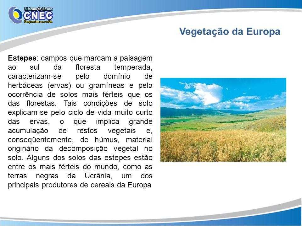 Vegetação da Europa Estepes: campos que marcam a paisagem ao sul da floresta temperada, caracterizam-se pelo domínio de herbáceas (ervas) ou gramíneas