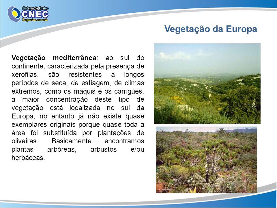 Vegetação da Europa Vegetação mediterrânea: ao sul do continente, caracterizada pela presença de xerófilas, são resistentes a longos períodos de seca,