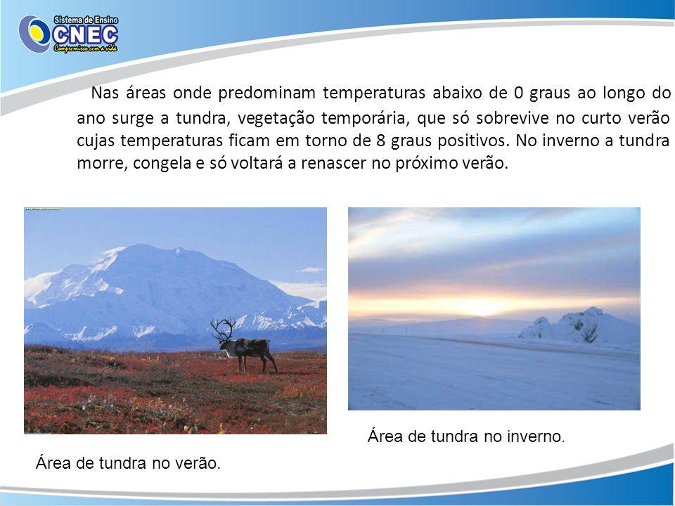 Nas áreas onde predominam temperaturas abaixo de 0 graus ao longo do ano surge a tundra, vegetação temporária, que só sobrevive no curto verão cujas t
