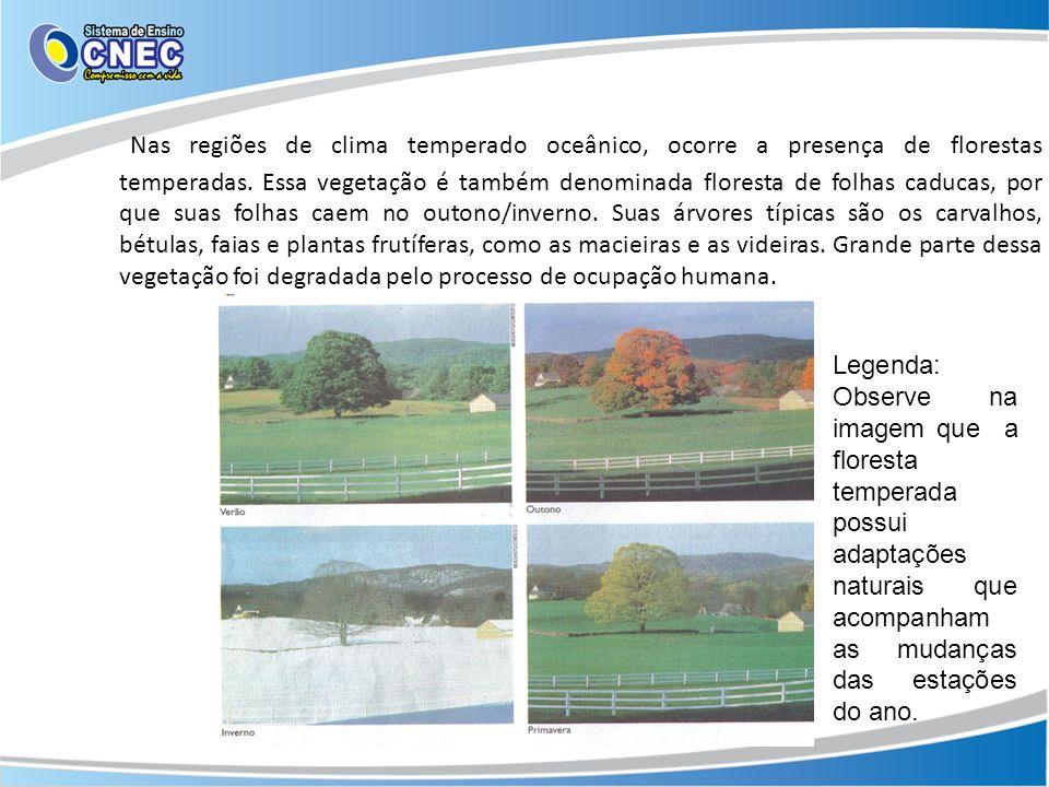 Nas regiões de clima temperado oceânico, ocorre a presença de florestas temperadas. Essa vegetação é também denominada floresta de folhas caducas, por