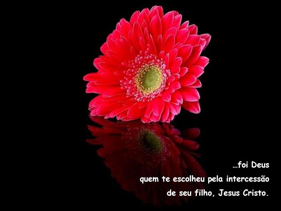 …foi Deus que está sempre junto a tí e te acompanha com amor nos caminhos da vida.