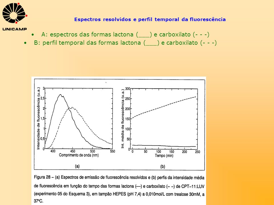 Espectros resolvidos e perfil temporal da fluorescência A: espectros das formas lactona (___) e carboxilato (- - -) B: perfil temporal das formas lact