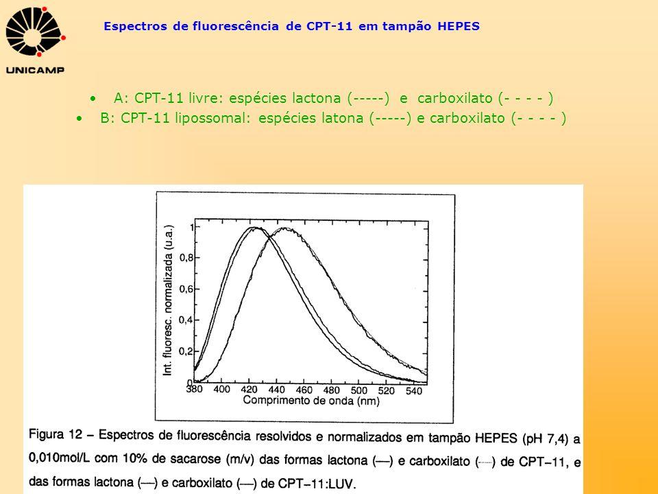 Espectros de fluorescência de CPT-11 em tampão HEPES A: CPT-11 livre: espécies lactona (-----) e carboxilato (- - - - ) B: CPT-11 lipossomal: espécies