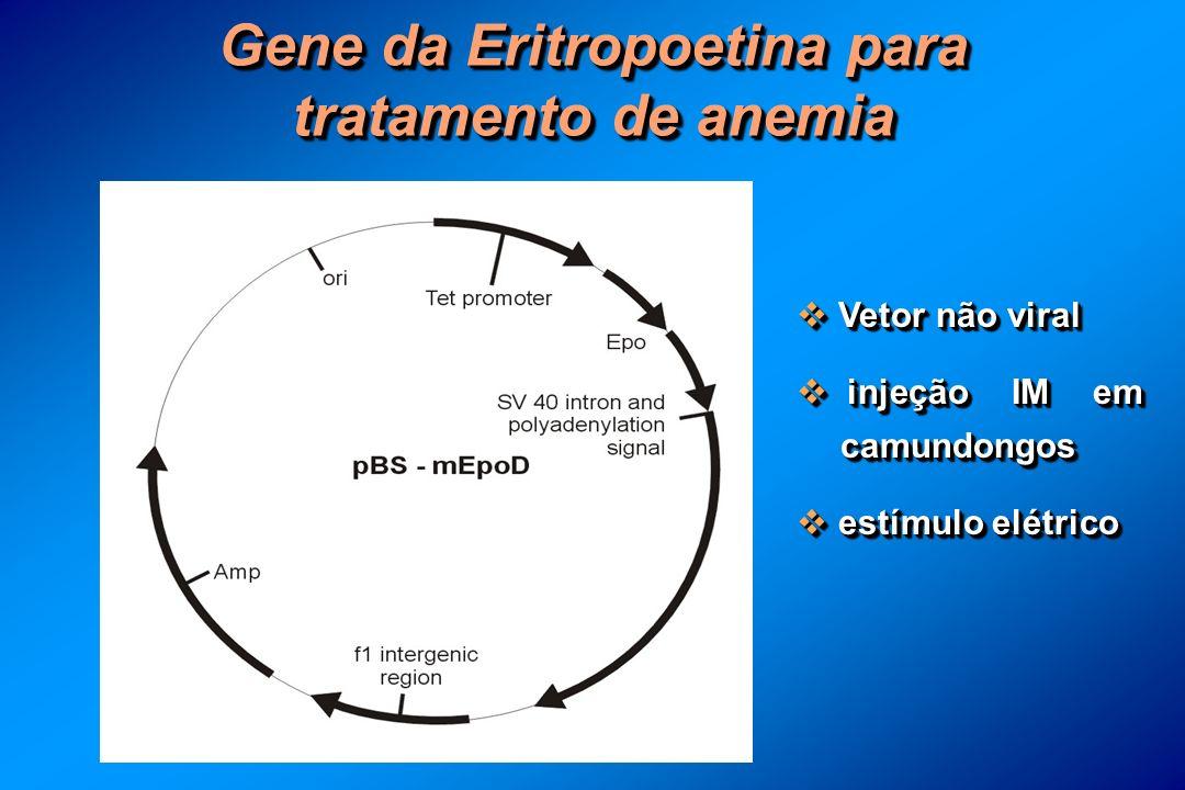 Gene da Eritropoetina para tratamento de anemia Vetor não viral Vetor não viral injeção IM em camundongos injeção IM em camundongos estímulo elétrico estímulo elétrico Vetor não viral Vetor não viral injeção IM em camundongos injeção IM em camundongos estímulo elétrico estímulo elétrico