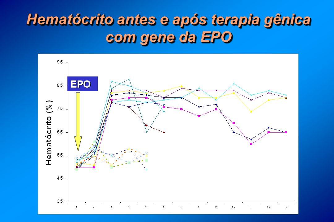 Hematócrito antes e após terapia gênica com gene da EPO EPO