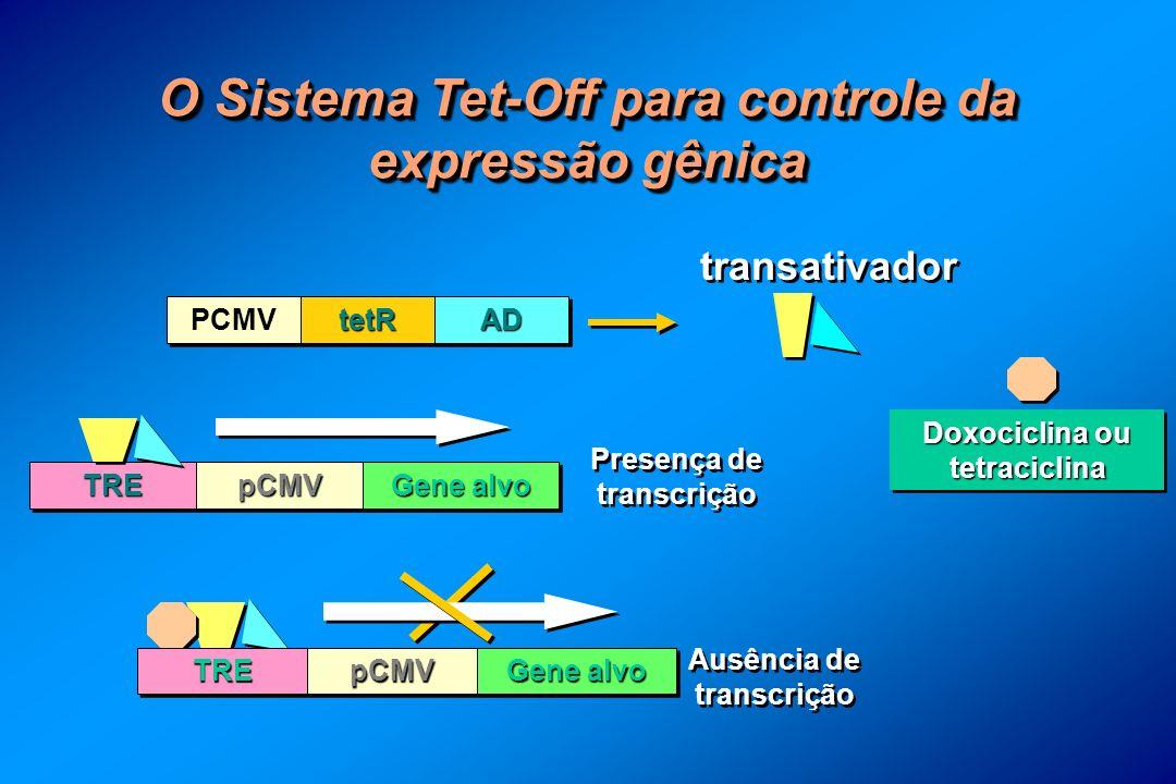 O Sistema Tet-Off para controle da expressão gênica Doxociclina ou tetraciclina Ausência de transcrição TRETRE PCMV tetRtetRADAD transativador TRETREpCMVpCMV Gene alvo pCMVpCMV Presença de transcrição