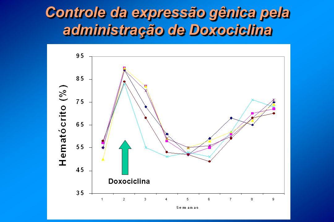 Controle da expressão gênica pela administração de Doxociclina Doxociclina