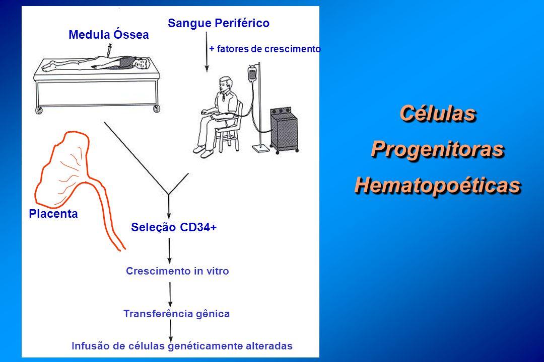 Células Progenitoras Hematopoéticas Placenta Medula Óssea Sangue Periférico + fatores de crescimento Seleção CD34+ Crescimento in vitro Transferência gênica Infusão de células genéticamente alteradas