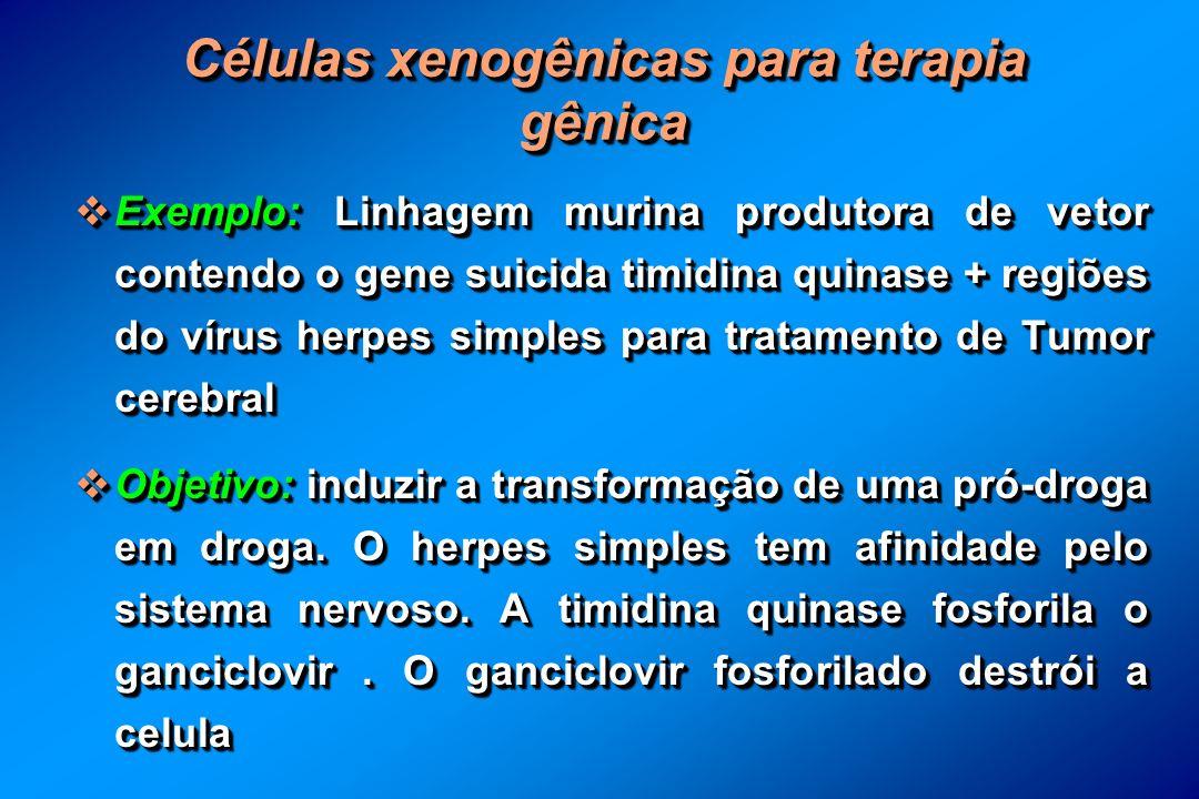 Células xenogênicas para terapia gênica Exemplo: Linhagem murina produtora de vetor contendo o gene suicida timidina quinase + regiões do vírus herpes simples para tratamento de Tumor cerebral Exemplo: Linhagem murina produtora de vetor contendo o gene suicida timidina quinase + regiões do vírus herpes simples para tratamento de Tumor cerebral Objetivo: induzir a transformação de uma pró-droga em droga.
