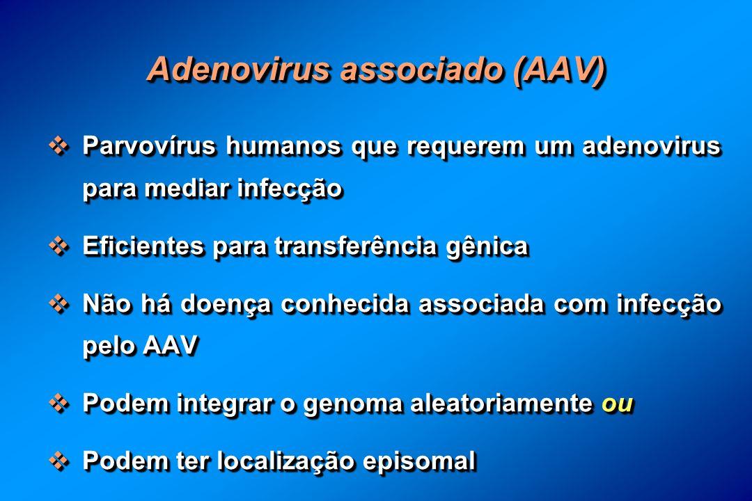 Adenovirus associado (AAV) Parvovírus humanos que requerem um adenovirus para mediar infecção Parvovírus humanos que requerem um adenovirus para mediar infecção Eficientes para transferência gênica Eficientes para transferência gênica Não há doença conhecida associada com infecção pelo AAV Não há doença conhecida associada com infecção pelo AAV Podem integrar o genoma aleatoriamente ou Podem integrar o genoma aleatoriamente ou Podem ter localização episomal Podem ter localização episomal Parvovírus humanos que requerem um adenovirus para mediar infecção Parvovírus humanos que requerem um adenovirus para mediar infecção Eficientes para transferência gênica Eficientes para transferência gênica Não há doença conhecida associada com infecção pelo AAV Não há doença conhecida associada com infecção pelo AAV Podem integrar o genoma aleatoriamente ou Podem integrar o genoma aleatoriamente ou Podem ter localização episomal Podem ter localização episomal
