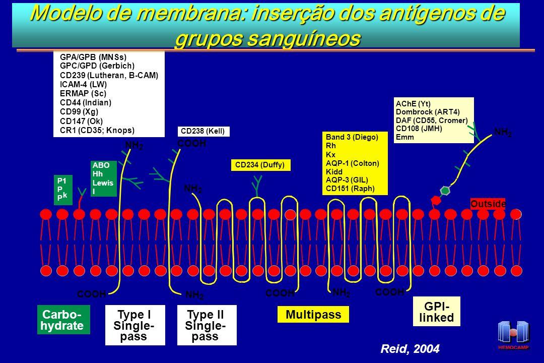 Modelo de membrana: inserção dos antígenos de grupos sanguíneos Outside NH 2 2 2 2 2 COOH GPI- linked COOH P1 P P k ABO Hh Lewis I GPA/GPB (MNSs) GPC/