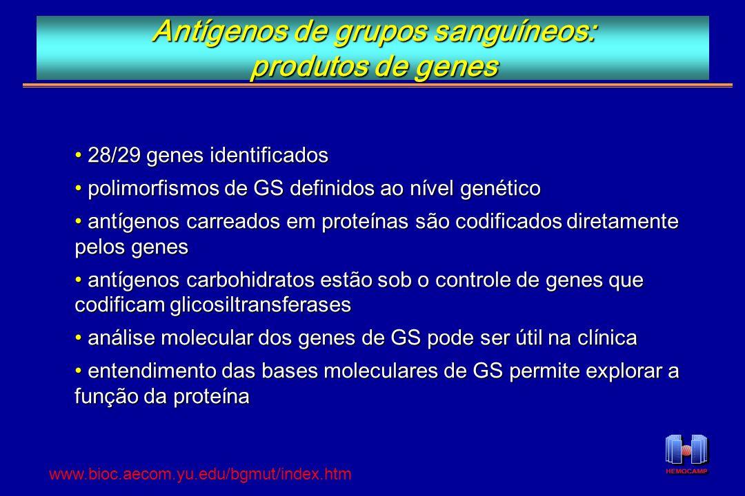 Antígenos de grupos sanguíneos: produtos de genes 28/29 genes identificados 28/29 genes identificados polimorfismos de GS definidos ao nível genético