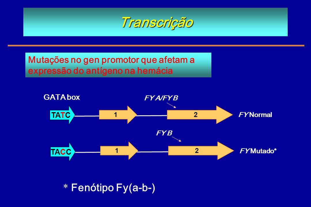 Transcrição 1 TATC 2 1 TACC 2 FY A/FY B FY B FY Normal FY Mutado* Mutações no gen promotor que afetam a expressão do antígeno na hemácia GATA box * Fe