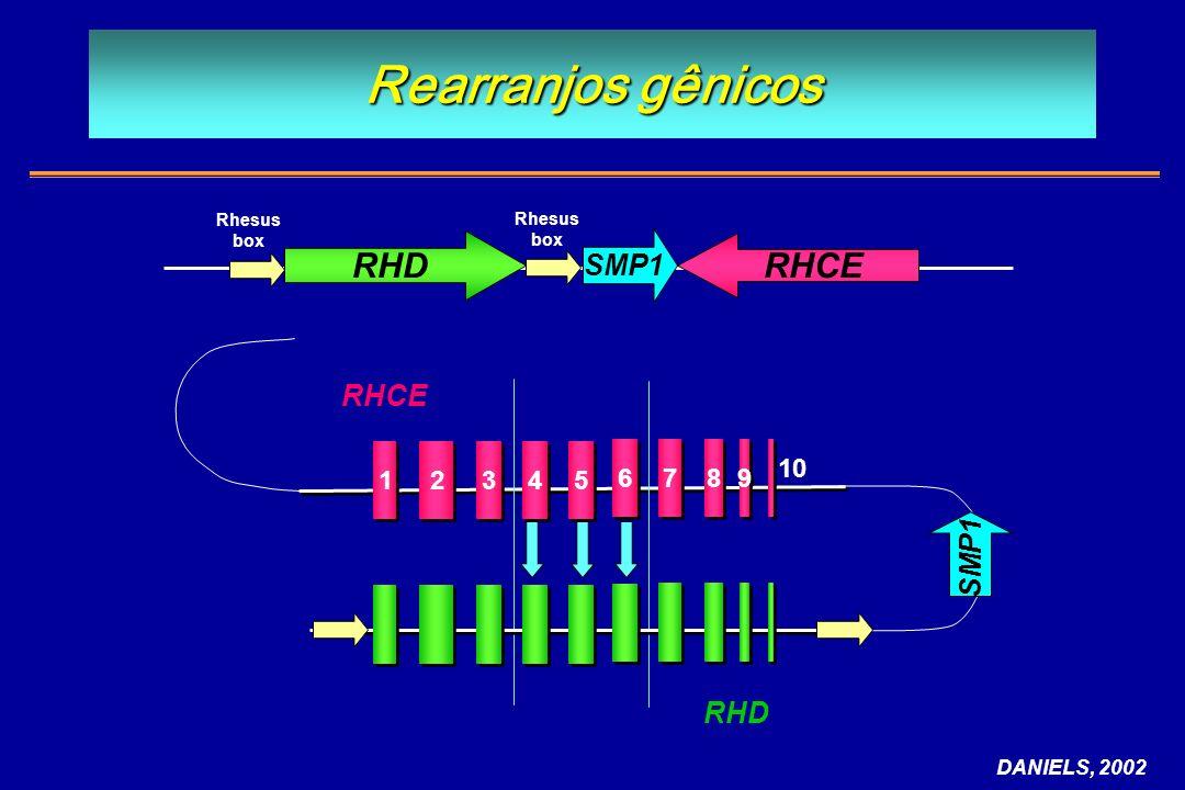 Rearranjos gênicos DANIELS, 2002 2 2 1 1 3 3 8 8 9 9 4 4 5 5 6 6 7 7 RHCE 10 RHD SMP1 RHCE SMP1 Rhesus box Rhesus box
