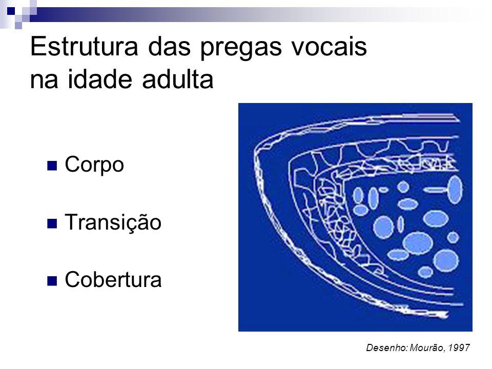 Estrutura das pregas vocais na idade adulta Corpo Transição Cobertura Desenho: Mourão, 1997