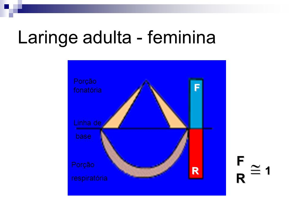 Laringe adulta - feminina F R Porção fonatória Linha de base Porção respiratóriaFR 1