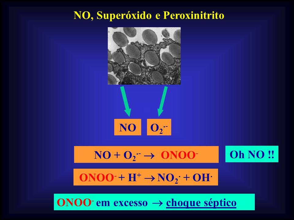 NO, Superóxido e Peroxinitrito NO + O 2. - ONOO - NOO2.-O2.- Oh NO !! ONOO - em excesso choque séptico ONOO - + H + NO 2. + OH.