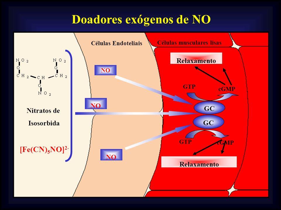 Nitratos de Isosorbida [Fe(CN) 5 NO] 2- GC GTP cGMP Células Endoteliais Células musculares lisas GTP cGMP Relaxamento NO GC NO Doadores exógenos de NO