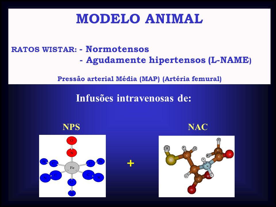 MODELO ANIMAL RATOS WISTAR: - Normotensos - Agudamente hipertensos (L-NAME ) Pressão arterial Média (MAP) (Artéria femural) Infusões intravenosas de: