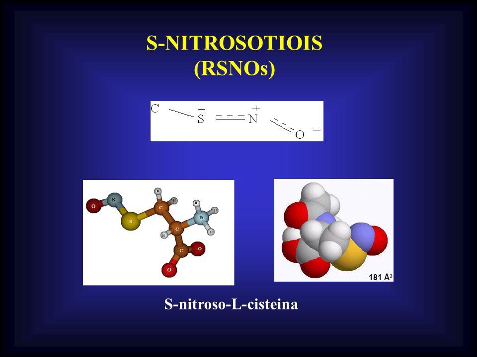 S-NITROSOTIOIS (RSNOs) S-nitroso-L-cisteina 181 Å 3