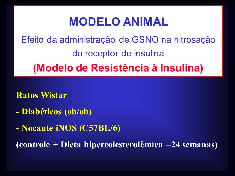 Ratos Wistar - Diabéticos (ob/ob) - Nocaute iNOS (C57BL/6) (controle + Dieta hipercolesterolêmica –24 semanas) MODELO ANIMAL Efeito da administração d