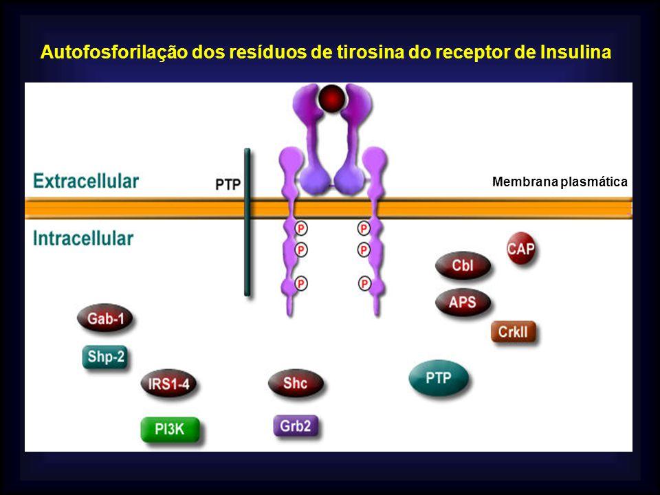 Autofosforilação dos resíduos de tirosina do receptor de Insulina Membrana plasmática