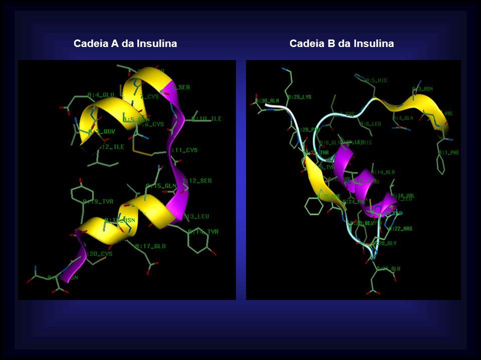 Cadeia A da InsulinaCadeia B da Insulina