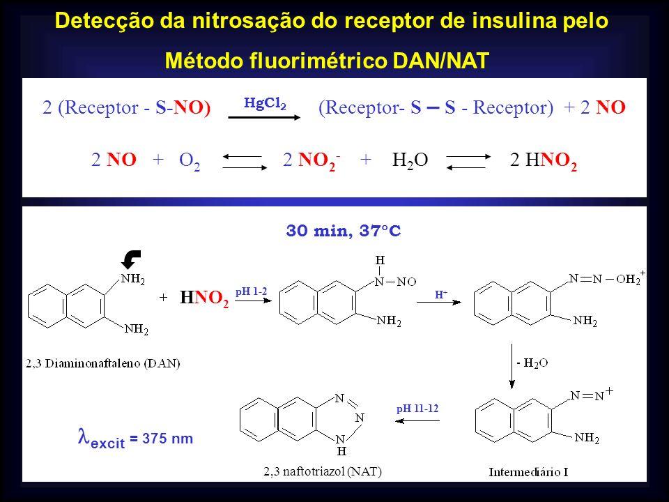 Detecção da nitrosação do receptor de insulina pelo Método fluorimétrico DAN/NAT 2 (Receptor - S-NO) (Receptor- S – S - Receptor) + 2 NO 2 NO + O 2 2